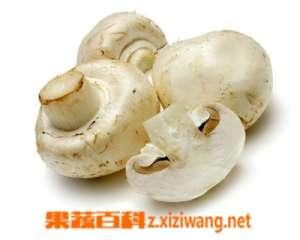怎么辨别蘑菇是否有毒